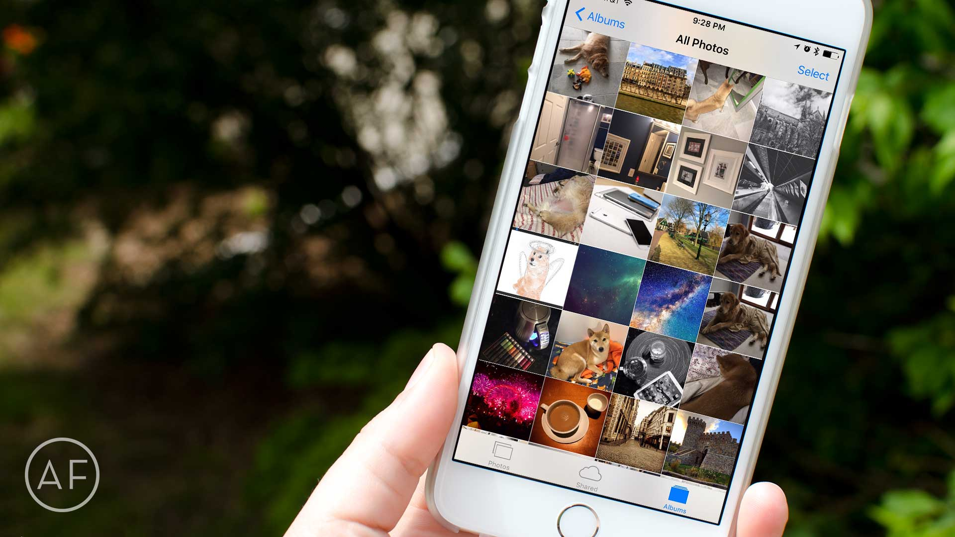 Live Photo previews not working on your iPhone? Here's the ...
